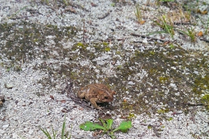 20140801 - toad